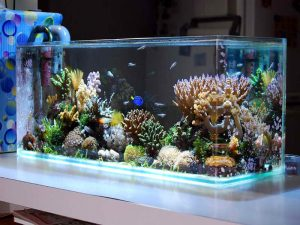 Die Top 5 Besten Aquarien