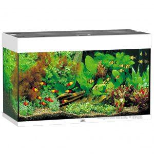 Die Besten Aquarien - Juwel Aquarium Rio
